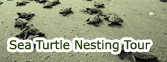 Sea turtle neting Tour